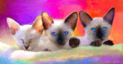 Animal Drawings Prints - Cute Siamese Kittens cats  Print by Svetlana Novikova