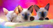 Cute Siamese Kittens Cats  Print by Svetlana Novikova