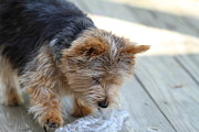 Cuddly Photo Prints - Cutest Dog Ever - Animal - 011313 Print by DC Photographer