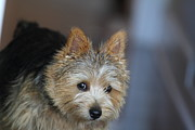 Furry Photo Prints - Cutest Dog Ever - Animal - 011321 Print by DC Photographer