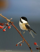 Chickadee Framed Prints - Cutest Of Cute Framed Print by Deborah Benoit