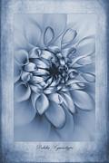 John Edwards - Cyanotype Dahlia