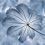 Rain Photos - Cyanotype Rain forest leaf by John Edwards