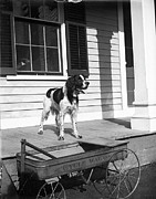 Puppy Photo Originals - Cycle Wagon and Dalmatian by Jan Faul