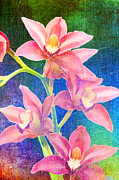 Robert Jensen Art - cymbidium hybrid orchid Finetta by Robert Jensen