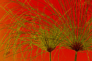 Green - Cyperus Papyrus Abstract by Ben and Raisa Gertsberg