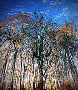 Cypress Abstract 1 Print by Sheri McLeroy