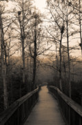Cypress Boardwalk Print by Gary Dean Mercer Clark