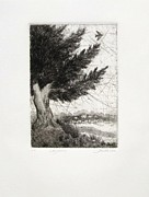 Etching Reliefs - Cypress by Carroll Woods