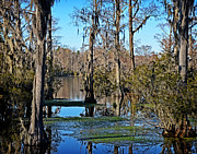 Clarendon County Prints - Cypress Lake Print by Linda Brown