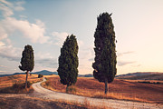 Tuscan Sunset Photo Posters - Cypress lined road in Tuscany Poster by Matteo Colombo