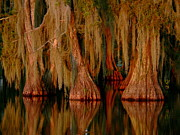 Louisiana Sunrise Photos - Cypress Maze by Orcinus Fotograffy