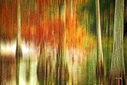 Autumn Trees Photo Prints - Cypress Pond Print by Scott Pellegrin