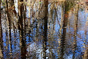 Nature Abstracts Prints - Cypress Reflection Nature Abstract Print by Carol Groenen