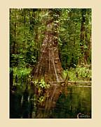Cypress Roots Ichetucknee Print by Linda Olsen