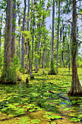 Dan Carmichael - Cypress Trees and Water...
