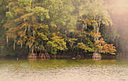 Susan Bordelon - Cypress Trees at...