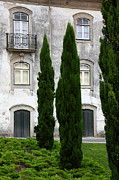 Castelo Metal Prints - Cypress Trees Metal Print by James Brunker