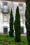 James Brunker - Cypress Trees