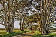 Cypress Tunnel Print by Robert Rus