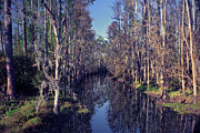 Chris Kusik Framed Prints - Cypress Tunnel. Shingle Creek. Framed Print by Chris  Kusik
