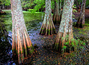 Water Reflections Photos - Cypress Waltz by Karen Wiles