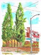 Acuarelas Paintings - Cypresses in Massachusett Ave - Westwood - California by Carlos G Groppa