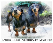 Dogs Digital Art Originals - Dachshund Poster by Betsy Cotton