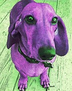 Dachshund - Purple People Greeter Print by Rebecca Korpita