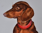 Dachshund Art Paintings - Dachshund Watercolor Painting by Kathy Flood