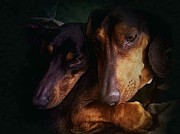 Dream Scape Originals - Dachshunds by Hugo Bussen
