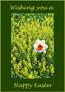 Photography By Govan; Vertical Format Framed Prints - Daffodil Easter Wish Card Framed Print by Andrew Govan Dantzler