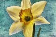 Petal Digital Art Prints - Daffodil Print by Jeff Kolker