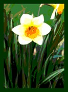 Fertilize Framed Prints - Daffodil with border Framed Print by L Brown