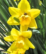 Bloom Prints - Daffodils and Ladybug Print by Cathy Lindsey