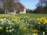 Brodie Photos - Daffodils at Brodie Castle by Phil Banks
