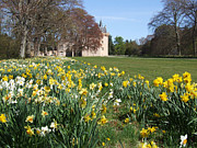 Brodie Photos - Daffodils - Brodie Castle by Phil Banks