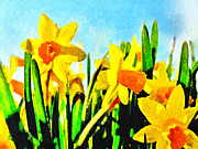 Phipps Conservatory Prints - Daffodils by Morning Light Print by Digital Photographic Arts