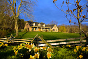 Randall Branham - Daffodils Depict Spring Home