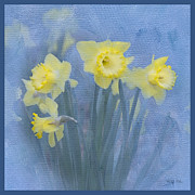 Jonquils Posters - Daffodils in Blue Poster by Betty LaRue