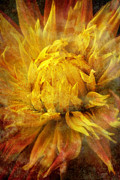 Moody Metal Prints - Dahlia abstract Metal Print by Garry Gay