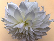 Tis Art Art - Dahlia Blossom by Tis Art