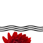 Nature Study Digital Art Prints - Dahlia Flower and Wavy Lines Triptych Canvas 1 - Red Print by Natalie Kinnear