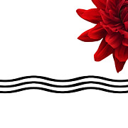 Nature Study Digital Art Prints - Dahlia Flower and Wavy Lines Triptych Canvas 3 - Red Print by Natalie Kinnear