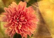 Sermon On The Mount Prints - Dahlia Print by Karen Beasley