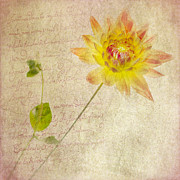 Yellow Petals Posters - Dahlia Squared with Prose Poster by Rebecca Cozart