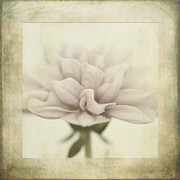 White Digital Art Posters - Dahlietta Textures Poster by John Edwards