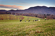 Bovine Art - Dairy Farm Nestled in the Mountains by Anne Beatty