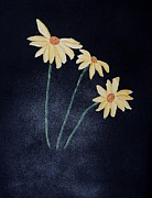 Marcia Lee Jones Prints - Daisies In The Mist Print by Marcia Lee Jones