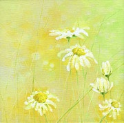 White And Green Framed Prints - Daisies Framed Print by Natasha Denger